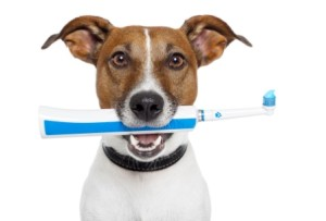 bigstock-Dog-With-Electric-Toothbrush-33478472
